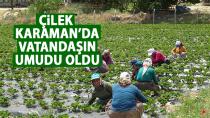 Karaman'da çilek yetiştiriciliği yöre halkının umudu oldu