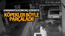 Karaman'da sokak köpeklerinin kediye saldırması kameraya yansıdı